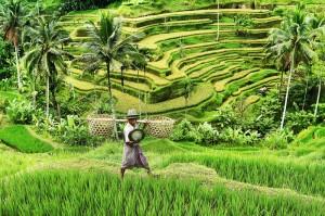 Foto berjudul Hijau Negeriku karya Adi Wiratmo, dalam Dji Sam Soe Potret Maha Karya Indonesia
