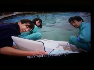 Memantau lumba-lumba hamil (screenshoot by Syaifuddin)